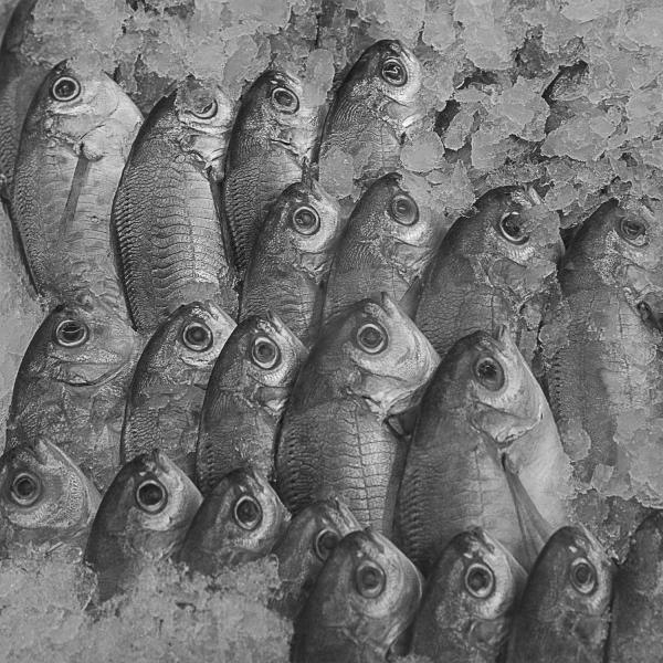 Fishin' Blues