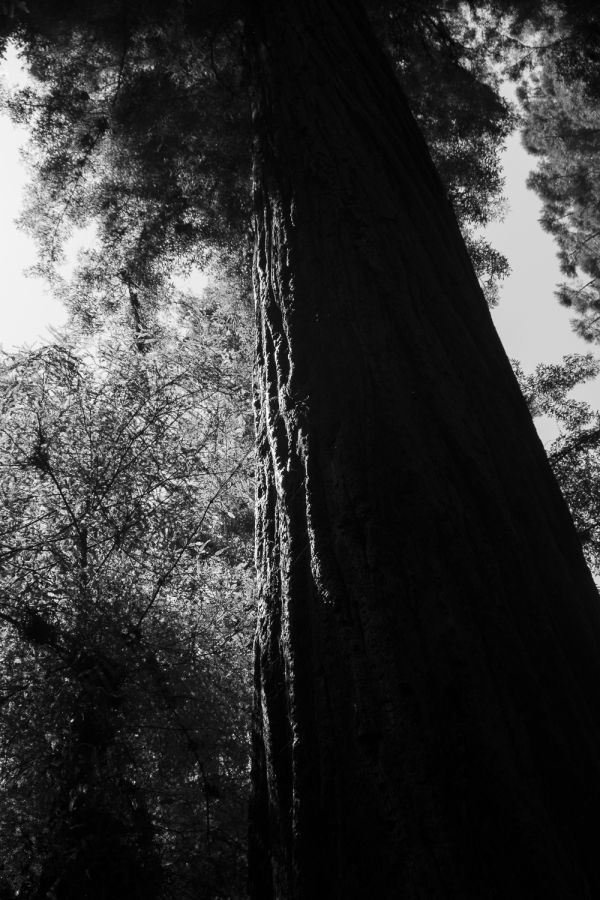 From the redwood forest........