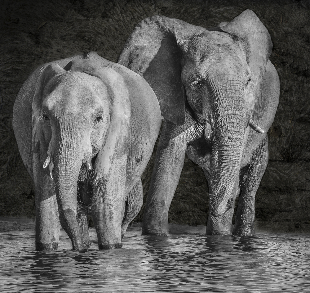 Giants in the River