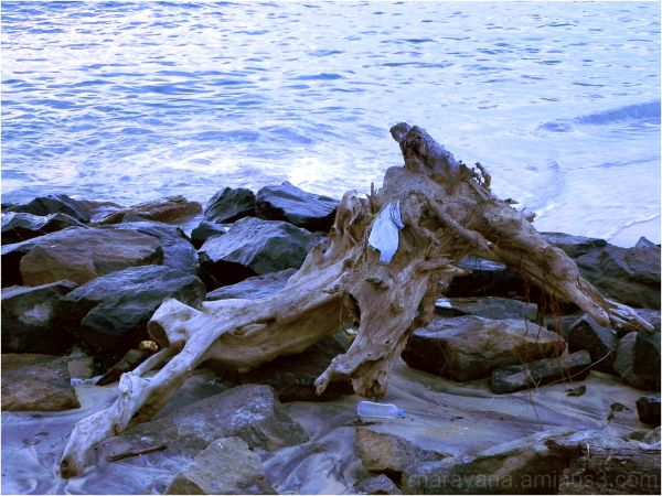Tree root on beach