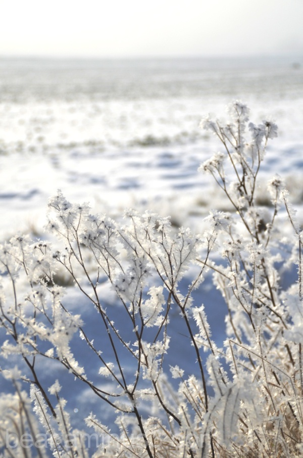 Ice cold Fens