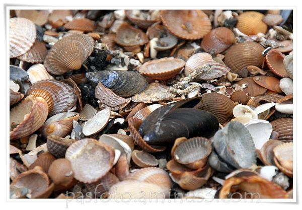 beach, shells,sand,aasignment