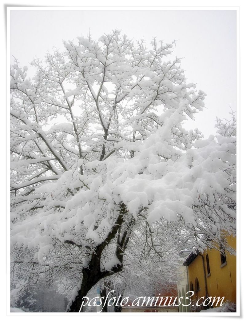 snow , winter