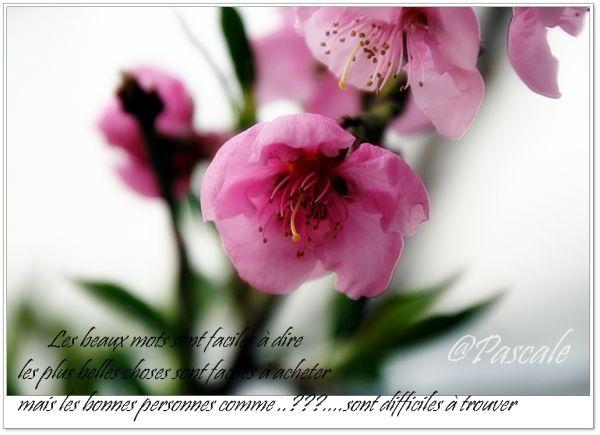 flower, nectarine , glass house