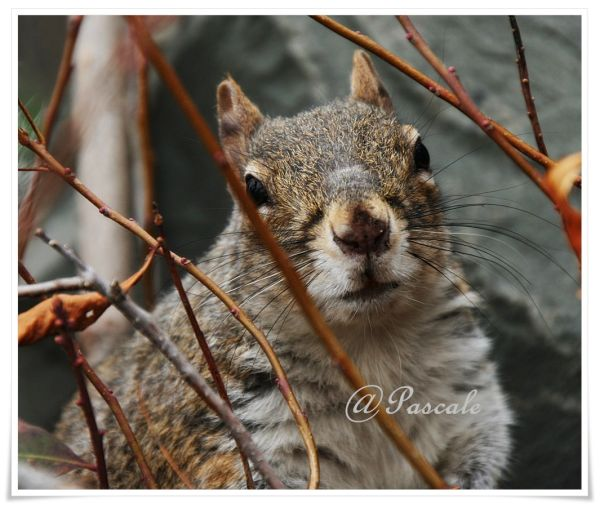 squirrel , NY ,