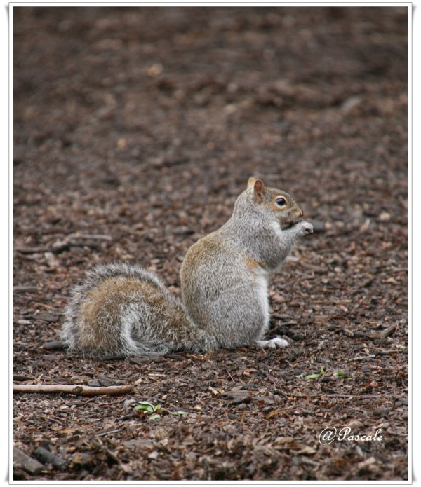 squirrel , NY
