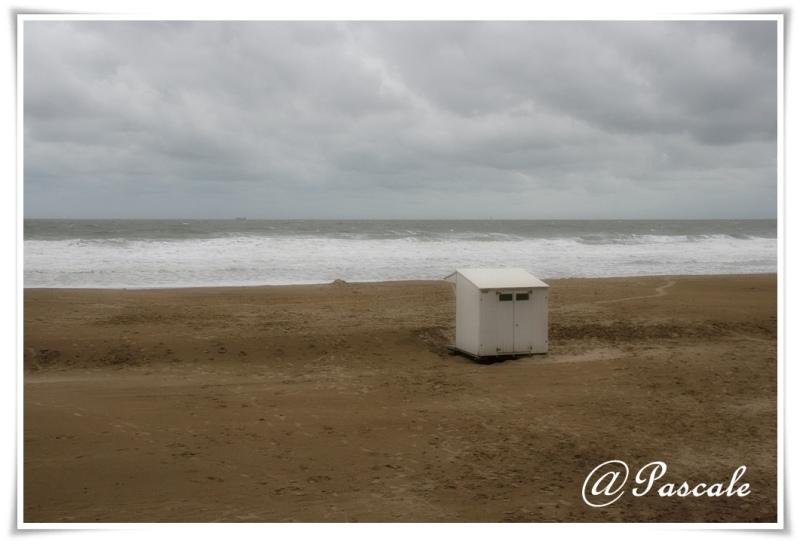 sea , beach , Blankenberge, Belgium , autumn
