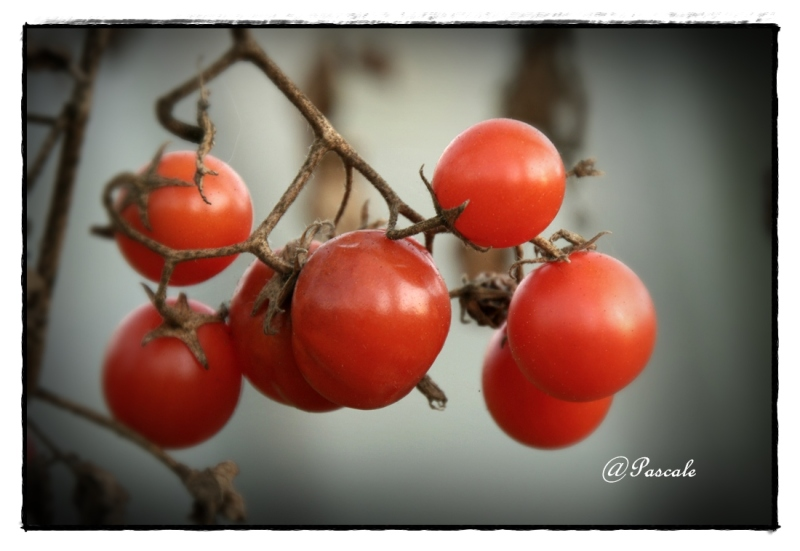 cherry tomato,
