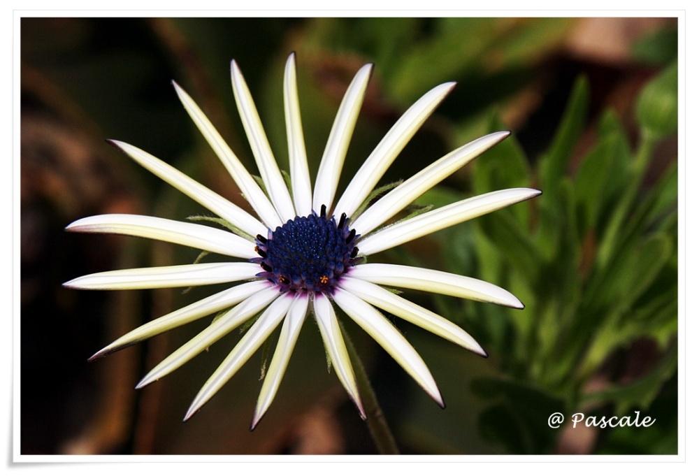 djerba, flower
