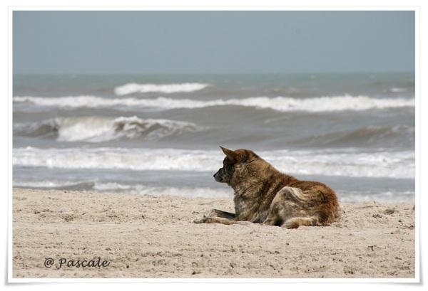 djerba, dog , beach