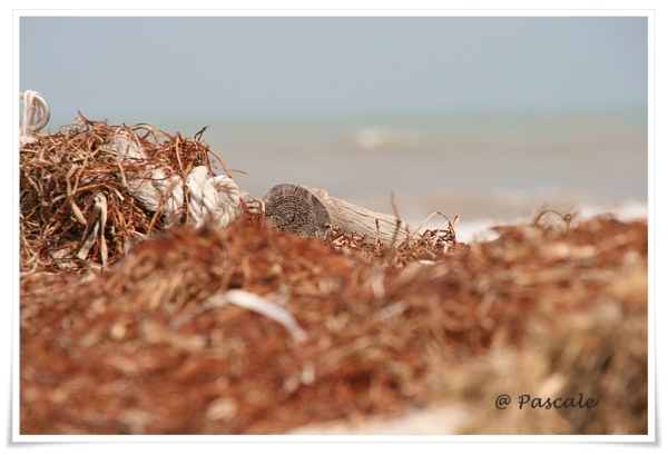 djerba, dog , beach, weeds, wood,  ropes