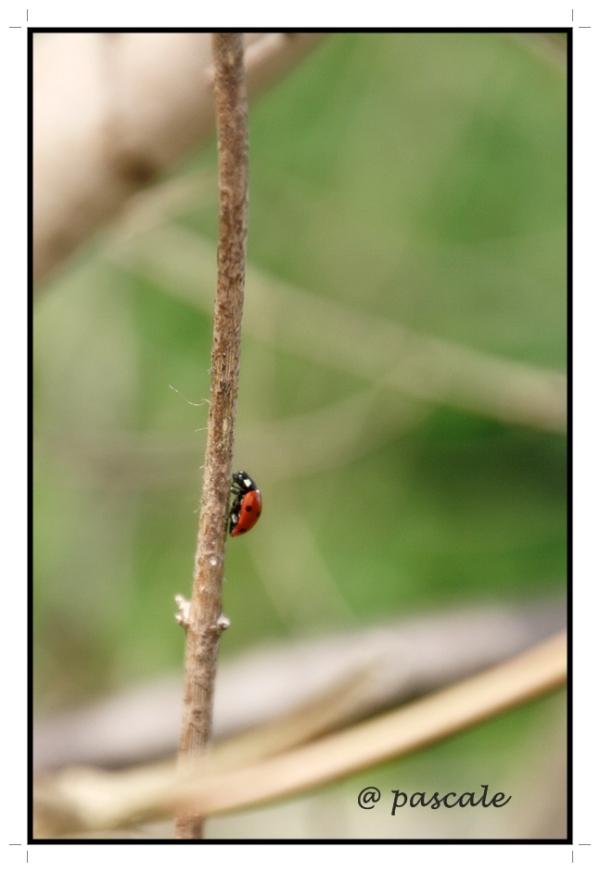 ladybug, lieveheersbeestje