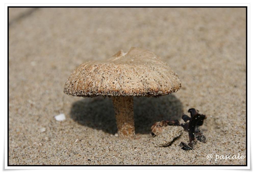 beachmushroom