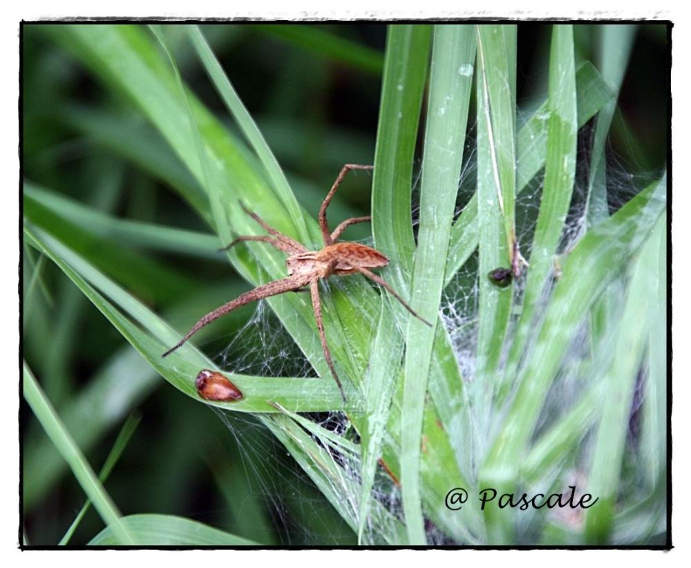 spider , web , spin, charlotte's web