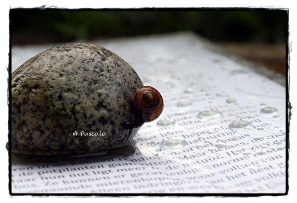 snail , slak