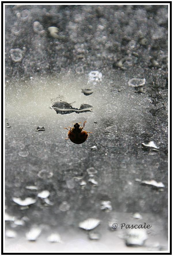 ladybug, kruidtuin leuven