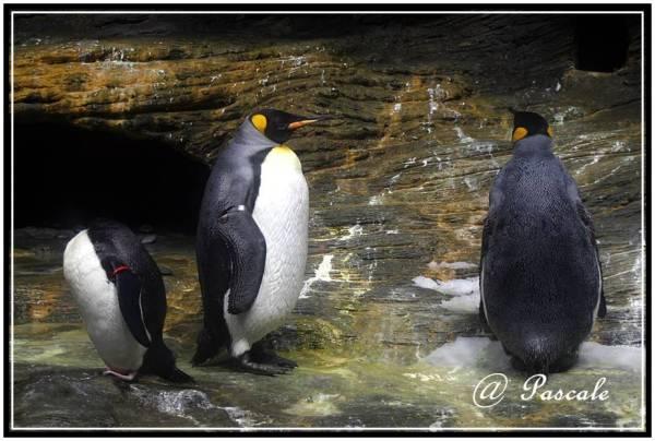 penguin  antwerp zoo