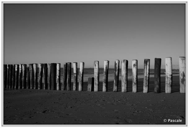 sea , netherlands , Cadzand , beach pole