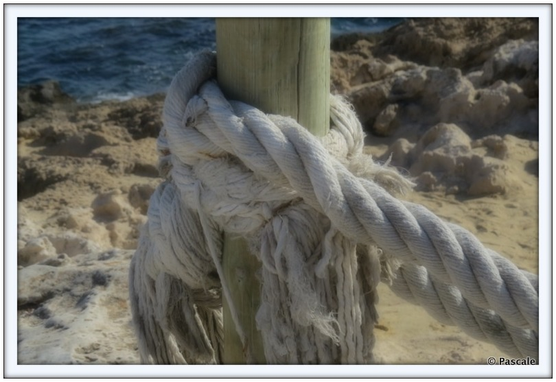 We learn the rope of life by untying its knots