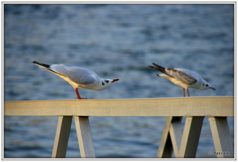 bird gymnastics