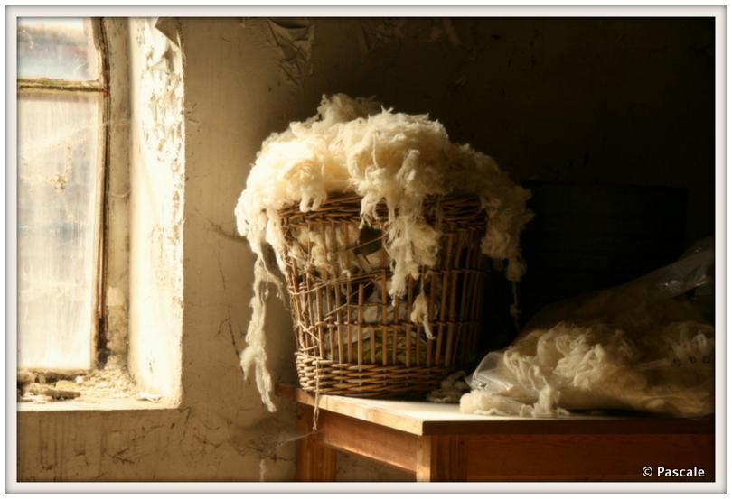 woolfactory