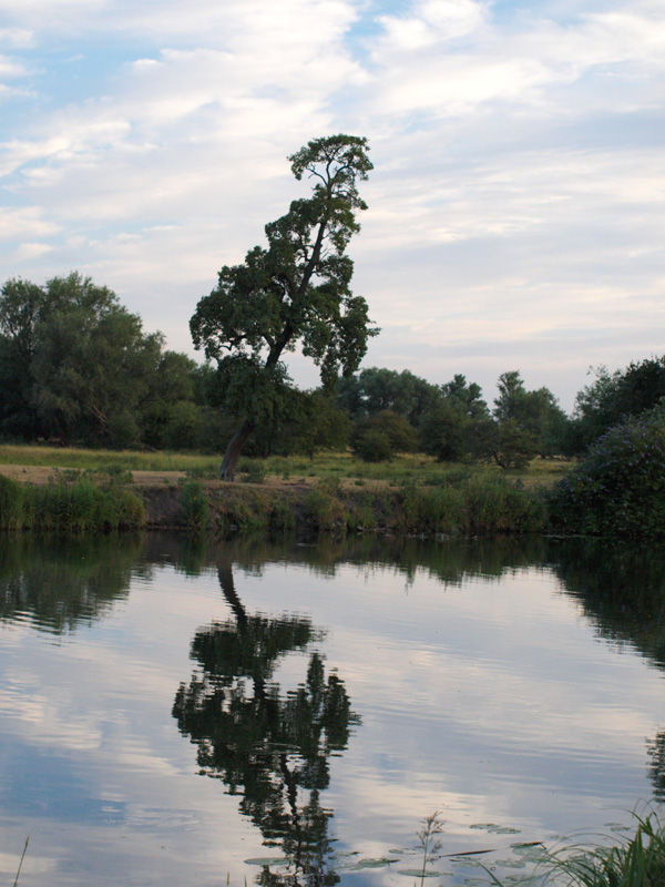 Tree by river