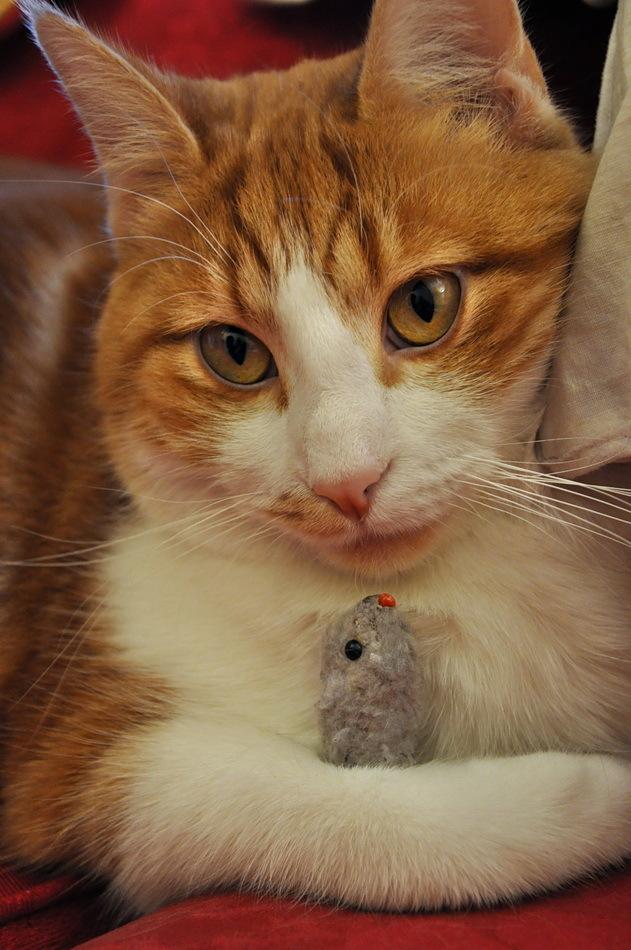"""""""touche pas à ma souris"""""""