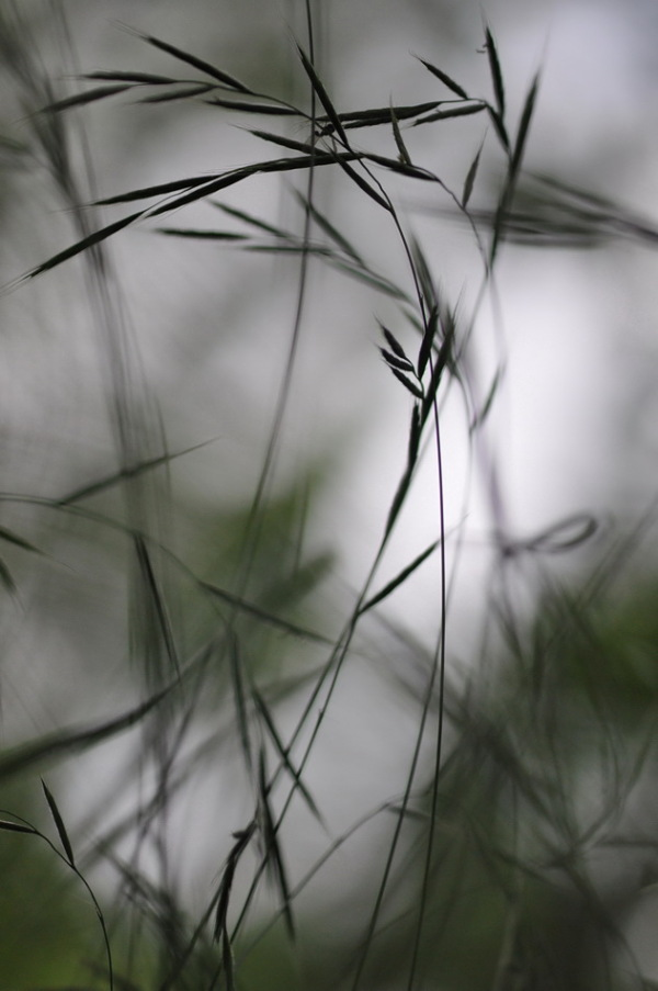 champêtre