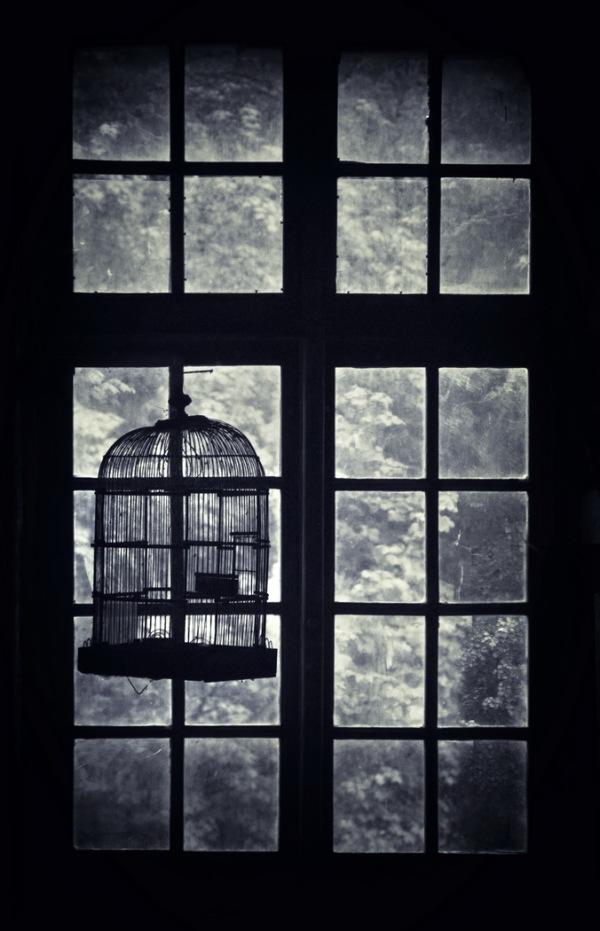 cage vitrée