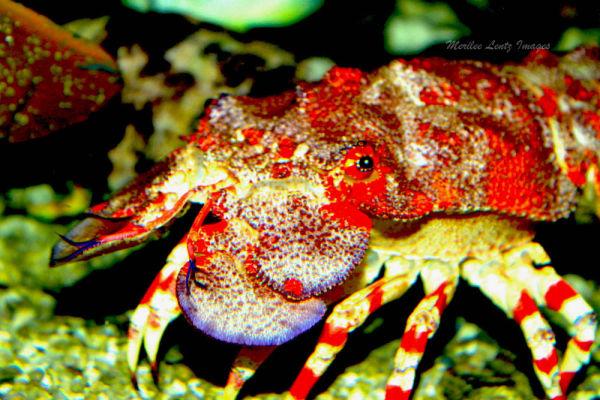 Aquarium in  Florida
