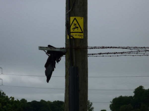 Crows can't read