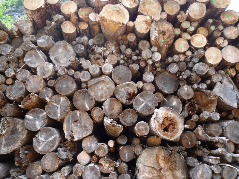 Austrian wood