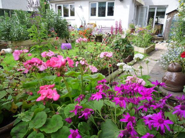 Sallys lovely garden