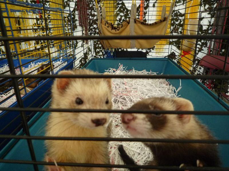 Hammock for ferrets