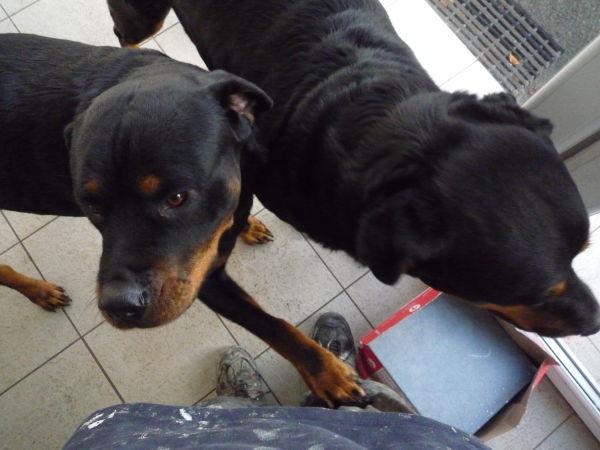 The friendly guard dogs Bonnie & Brewster