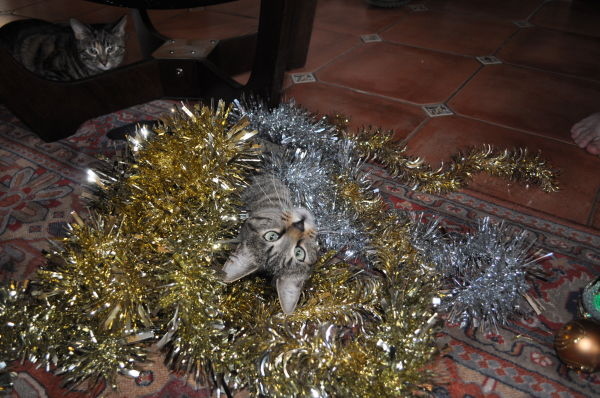 Tinsel boy