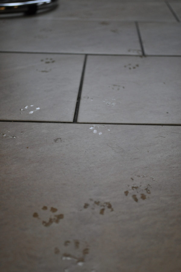 Cat mat required