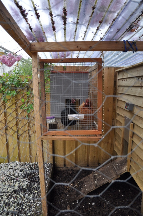 Anti Broody Coop or Chicken Prison