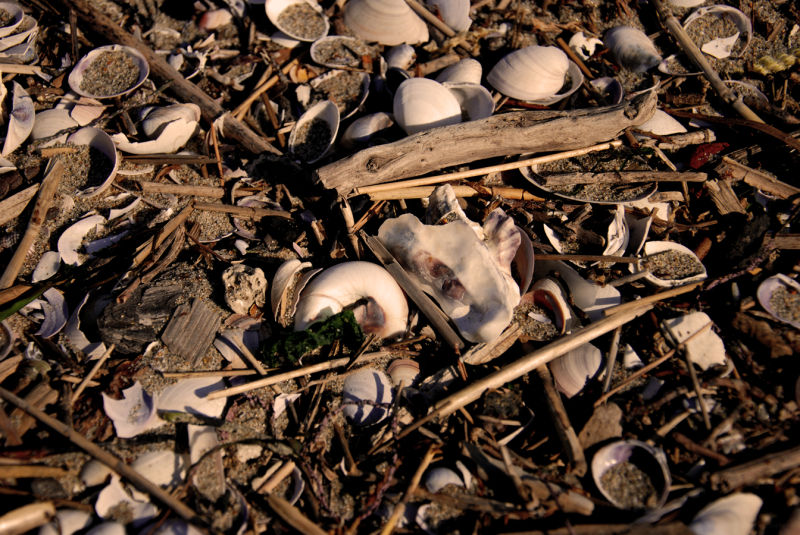shells on a japanese beach