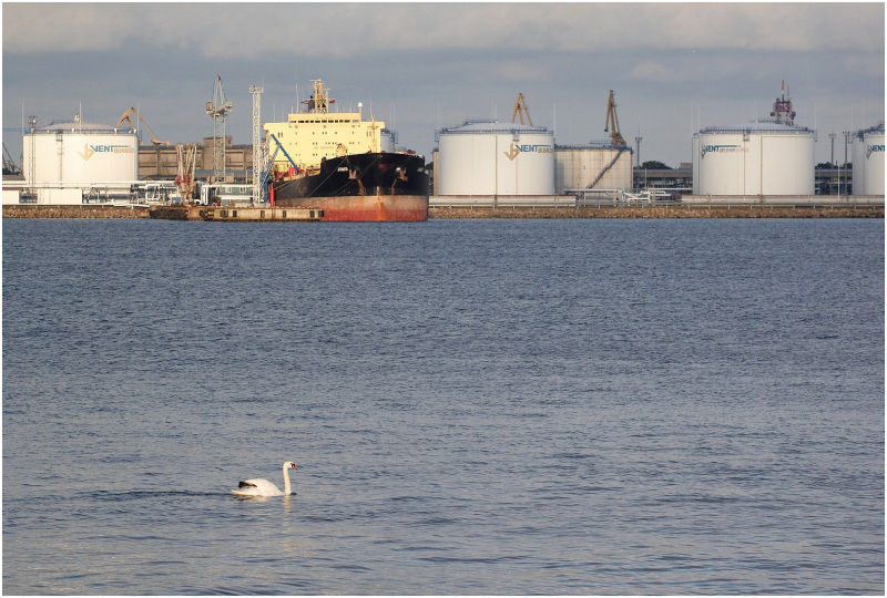 Swan in port