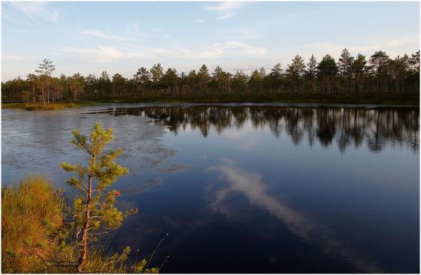 Bog lake / Rabajärv