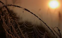 Cobweb in sunrise