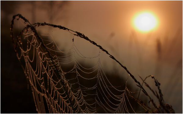 Cobweb in sunrise