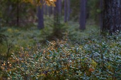 evening in forest