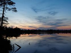 Evening in bog