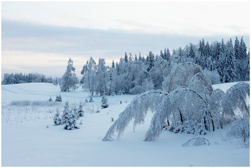 Haanja, winter