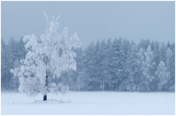 Winter landscape in Estonia