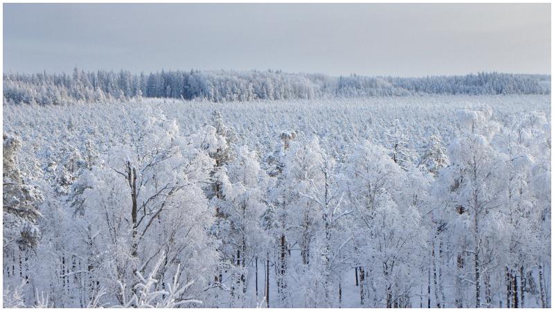 Winte in Estonia