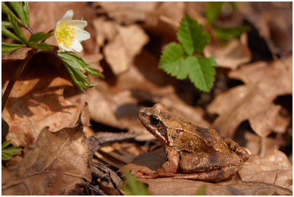 Naudib kevadet / Enjoying the spring