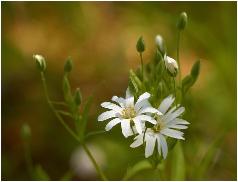 Kevadised toonid